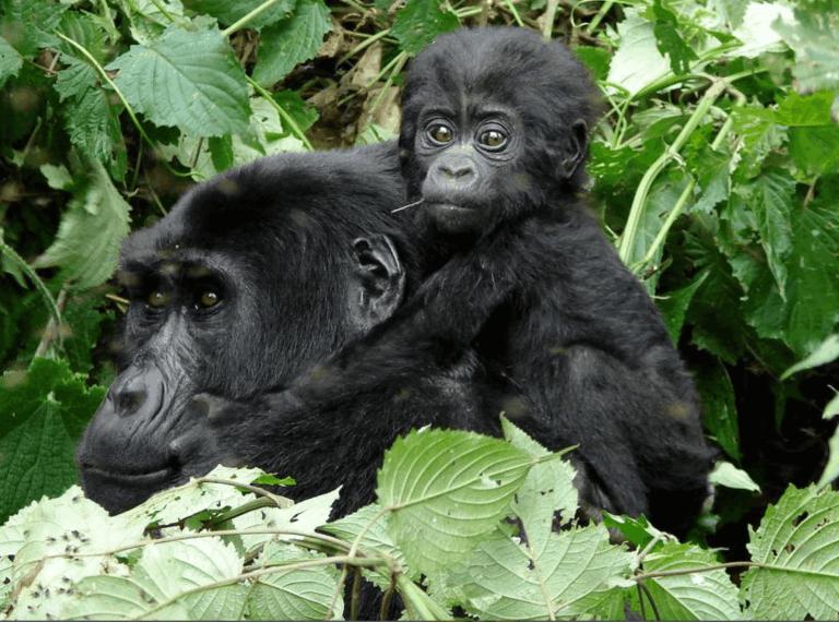 Mama and Baby in Uganda