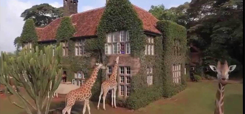 Lead Giraffe 1