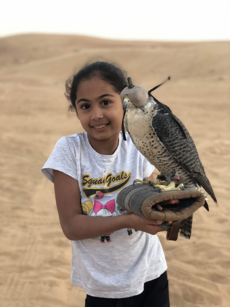 Meet the falcon