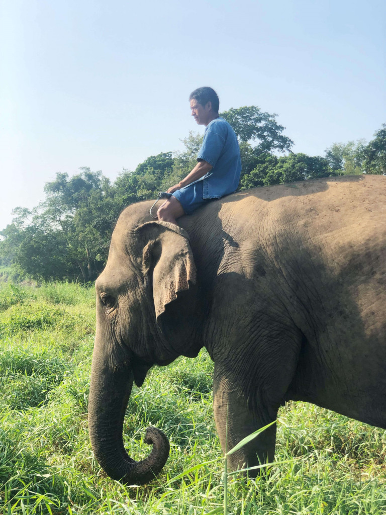 A mahout with his elephant living at the camp