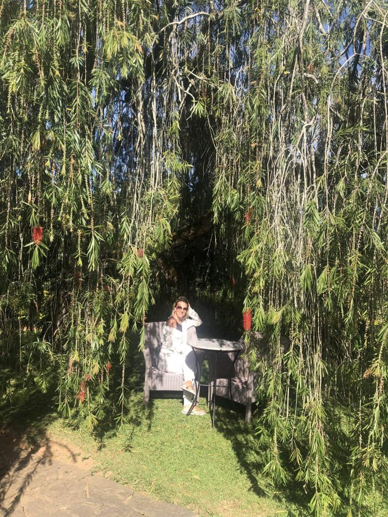 Tea spots under the tree