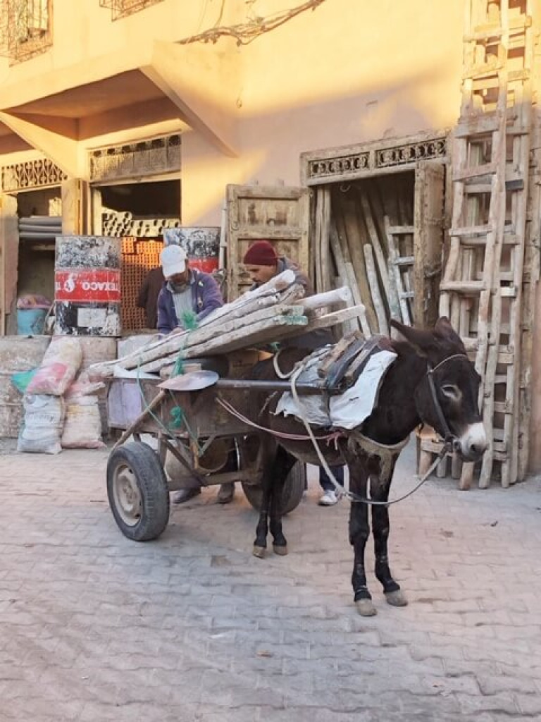 Souk transport