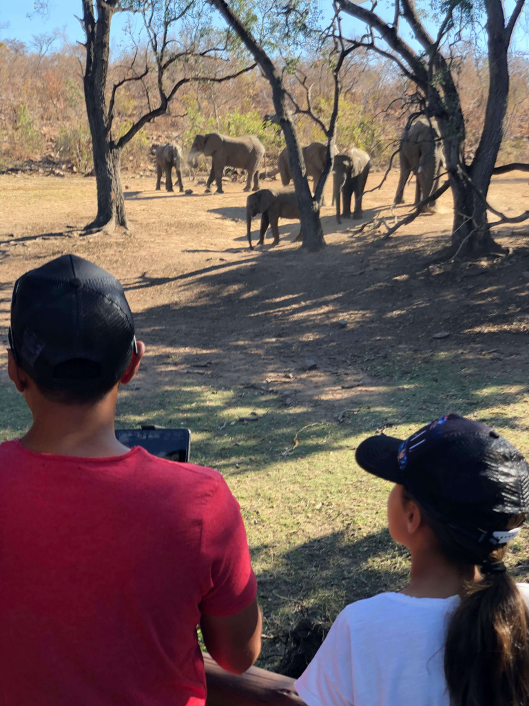 When all the elephants came to see what the drone noise was.