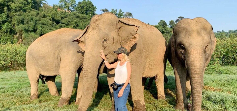 Lead elephants