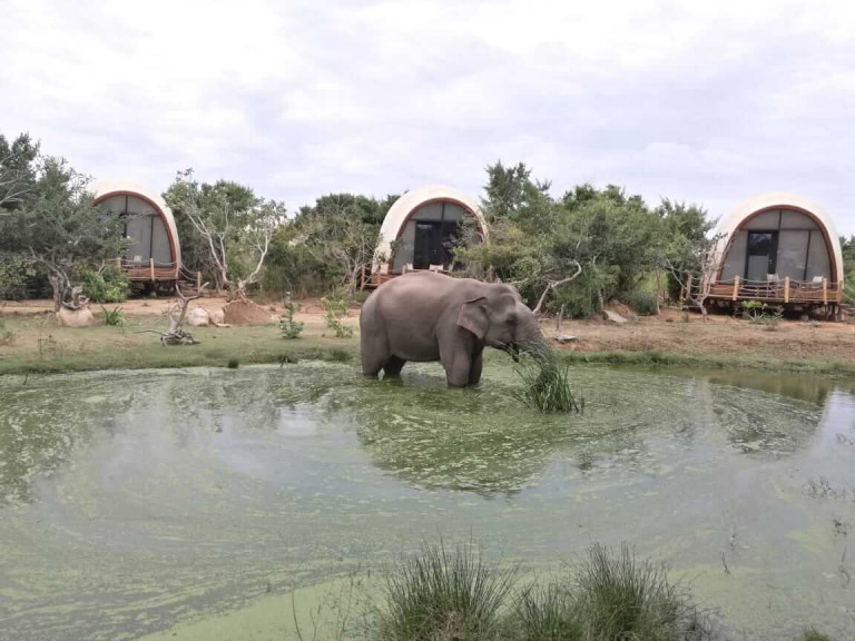 Elephants drinking from the lodge watering hole