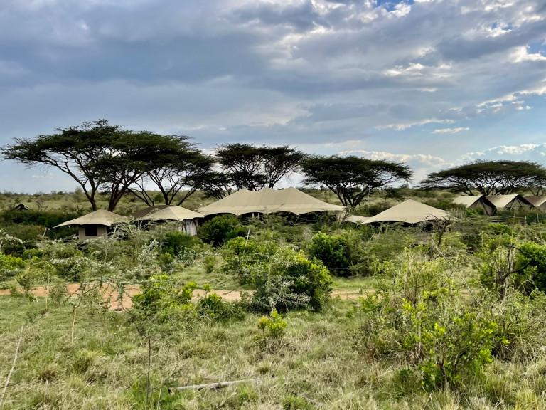 Mara Nyika under acesia trees