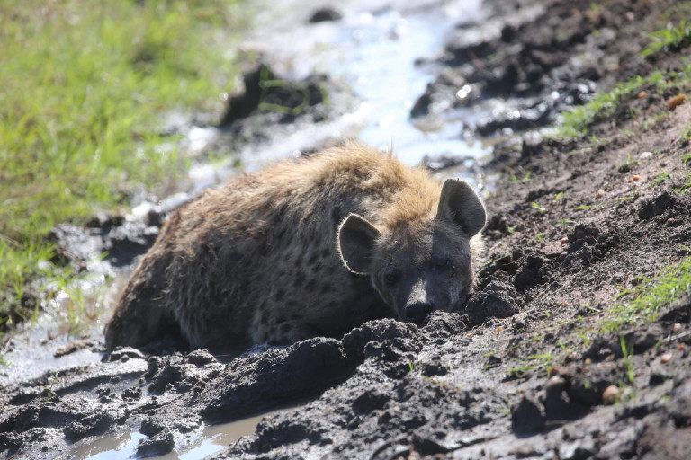 Keeping cool in the mud